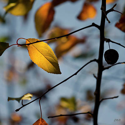 Photograph - Last Leaves Of Autumn II by David Gordon