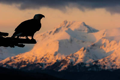 Photograph - Last Light Bald Eagle by Mark Miller