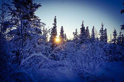 Photograph - Last Light In The Woods - Inuvik by Desmond Raymond