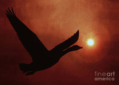 Canadian Geese Mixed Media - Last Light by KaFra Art