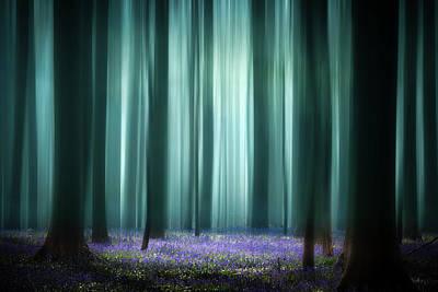 Photograph - Last Light Of The Season by Dirk Ercken