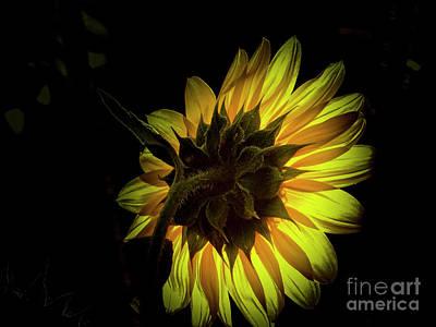 Photograph - Last Light On The Petals by Deniece Platt