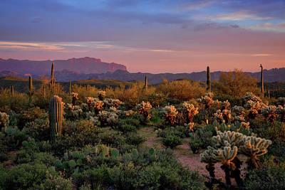 Photograph - Last Light On The Sonoran  by Saija Lehtonen