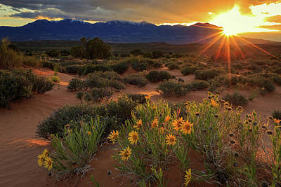 Last Light On Wildflowers Beneath The Henry Mountains. Art Print by Johnny Adolphson