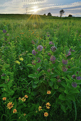 Photograph - Last Light On Wildflowers In Glacial Park by Ray Mathis