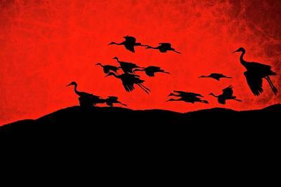 Photograph - Last Light, Sandhill Cranes, Bosque Del Apache, Nm by Flying Z Photography by Zayne Diamond