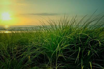 Photograph - Last Light Through The Coastal Grasses by Don Schwartz