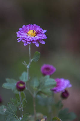 Photograph - Last Of Its Kind by Elvira Pinkhas