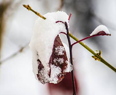 Snow Photograph - Last Of The Autumn Red by Deborah Smolinske