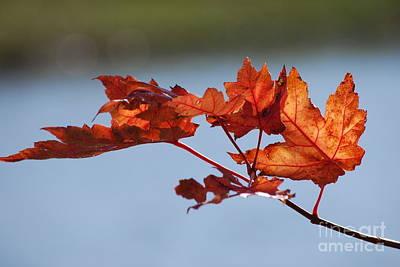 Last Of The Leaves Art Print by Joy Bradley