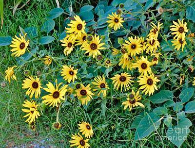 Photograph - Last Of The Sunflowers by Janette Boyd