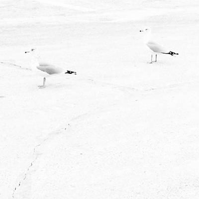 Photograph - Last One... #seagulls #blendingin by Tricia Elliott