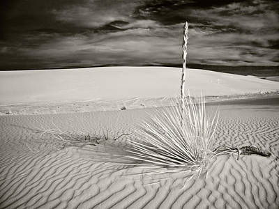 Photograph - Last One Standing by Mike McMurray