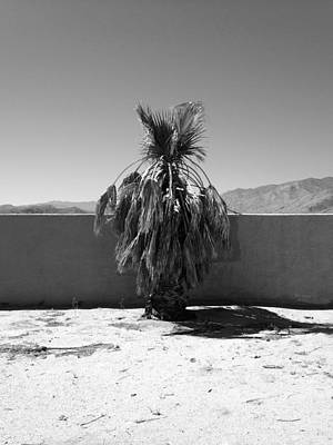 Photograph - The Last Black And White Palm by Stan Magnan