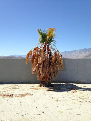 Photograph - The Last Palm by Stan  Magnan