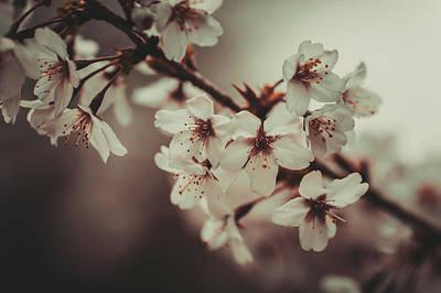 Photograph - Last Spring by Jenny Rainbow
