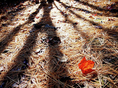 Photograph - Last To Fall by Rod Stewart