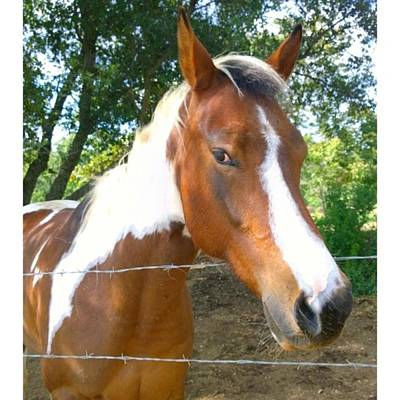 Animals Photograph - Last Week, I Met My First #horse! She by Shari Warren