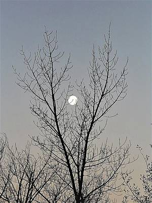 Photograph - Last Winter Moon by Deborah Moen