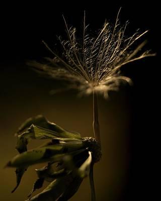 Photograph - Last Wish by Erica Kinsella
