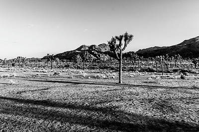 Photograph - Late Afternoon At Joshua Tree by Mark Hamilton