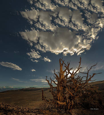 Photograph - Late Afternoon In The Bristlecone Forest by Tim Bryan
