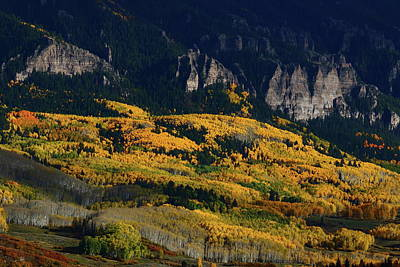Art Print featuring the photograph Late Afternoon Light On Aspen Groves At Silver Jack Colorado by Jetson Nguyen