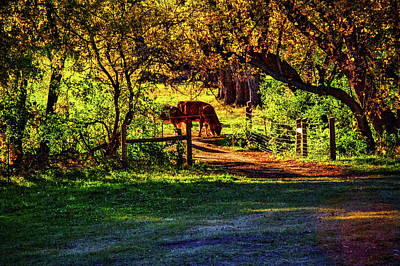 Photograph - Late Afternoon On The Farm by Roger Passman