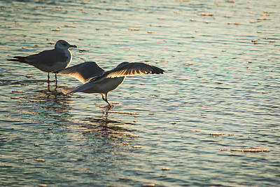 Photograph - Late Afternoon Wading by Joni Eskridge