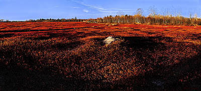 Photograph - Late Autumn Crimson Blueberry Barrens by Marty Saccone