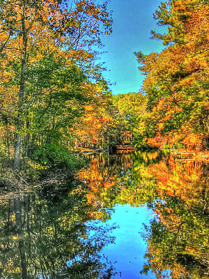 Photograph - Late Autumn In My Backyard by Don Mercer