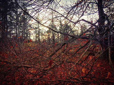 Photograph - Late Autumn Morning by No Alphabet