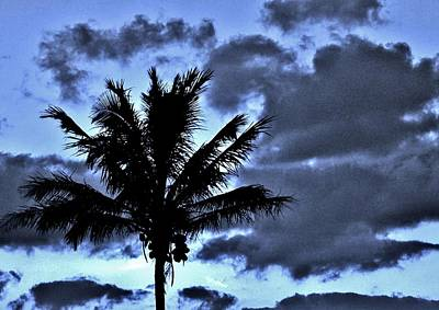 Photograph - Late Day Palm by John Wartman