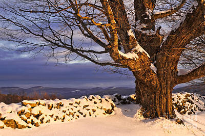 Photograph - Late Day Winter Light by Alan L Graham