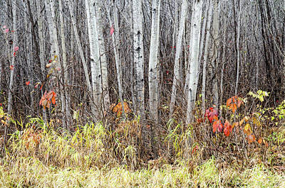 Art Print featuring the photograph Late Fall Splendour by Rob Huntley