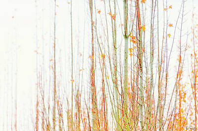 Photograph - Late Fall Tree Branches by Dee Browning