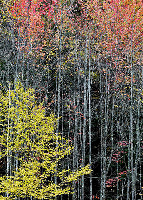 Photograph - Late Fall Woods by Alan L Graham
