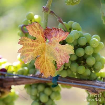 Photograph - Late Harvest by DJ Florek