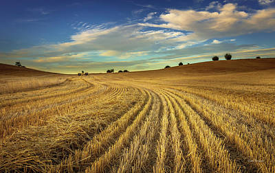 Photograph - Late Harvest by Tim Bryan