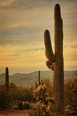 Photograph - Late Light 0n Saguaro Txt by Theo O'Connor