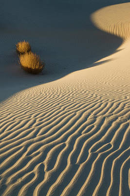 Late Light On The Dunes Original