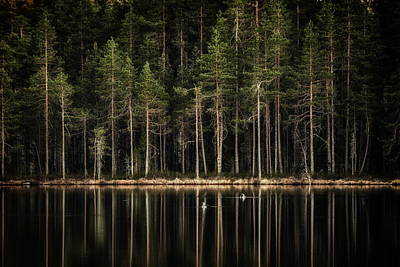 Jouko Lehto Royalty Free Images - Late loons Royalty-Free Image by Jouko Lehto