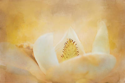 Photograph - Late Magnolia 2 Flower Art by Jai Johnson