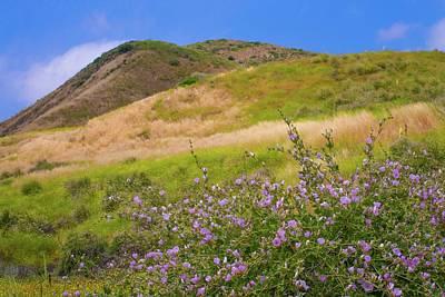 Photograph - Late Season Wildflowers by Lynn Bauer