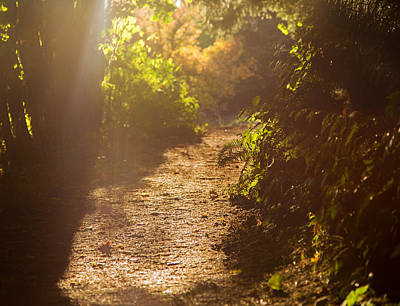 Photograph - Late September Light by Kunal Mehra