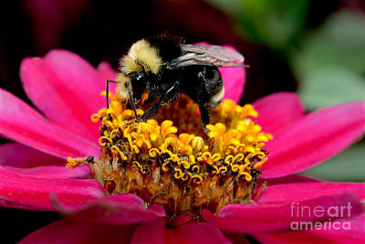 Photograph - Late Summer Bee Activity by Terry Elniski