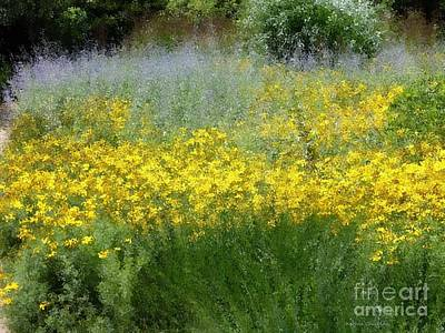 Photograph - Late Summer by Kathie Chicoine
