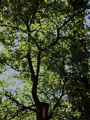 Photograph - Late Summer Shade Through The Trees by Robert J Sadler