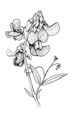 Twine Digital Art - Lathyrus Sylvestris by Freya Horn