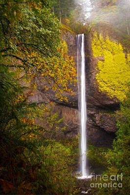 Photograph - Latourell Falls In The Fall by Sonya Lang